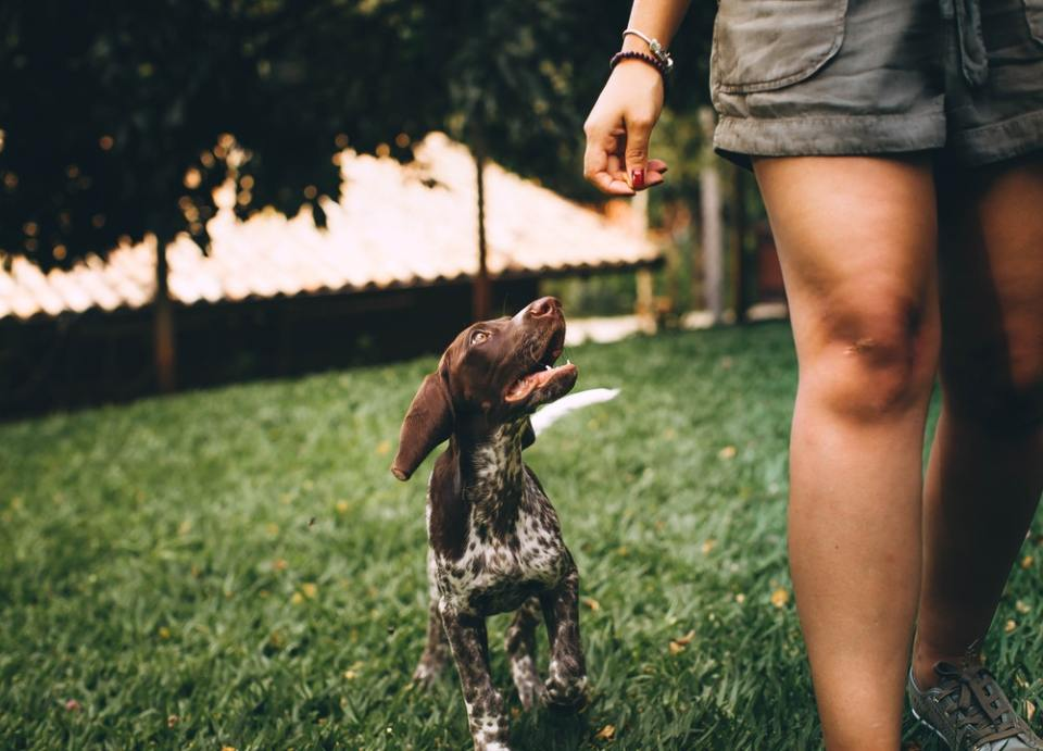 Un perro se sienta en los pies de su humano para estar cerca de él