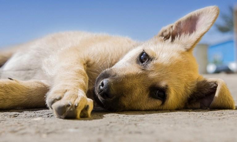 melatonina para perros