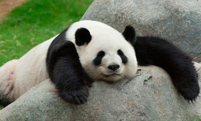 animales más tranquilos del mundo