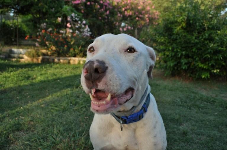 SOS Badajoz es uno de los sitios donde puedes adoptar un perro en Extremadura