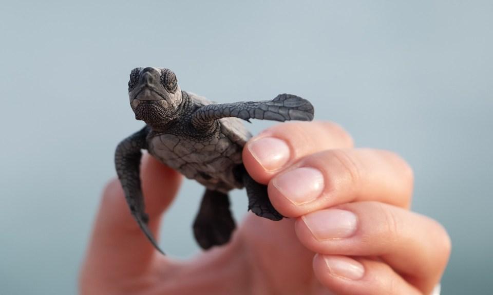 Posibles complicaciones en la salud por las que tener tortugas en casa es malo