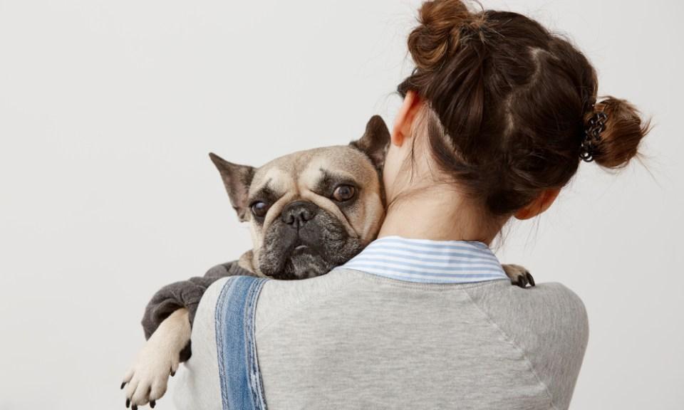 dar cariño a un perro