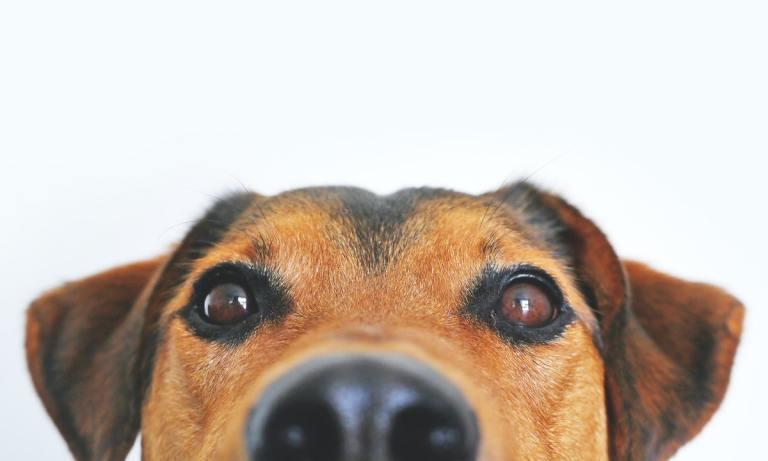 Discover Dogs es un sitio único para los amantes de los canes