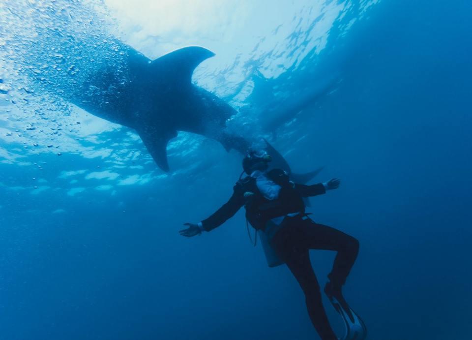 Te contamos todo acerca de la importancia de los tiburones