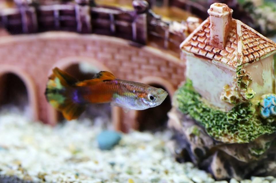La lejía es un método seguro para desinfectar el acuario