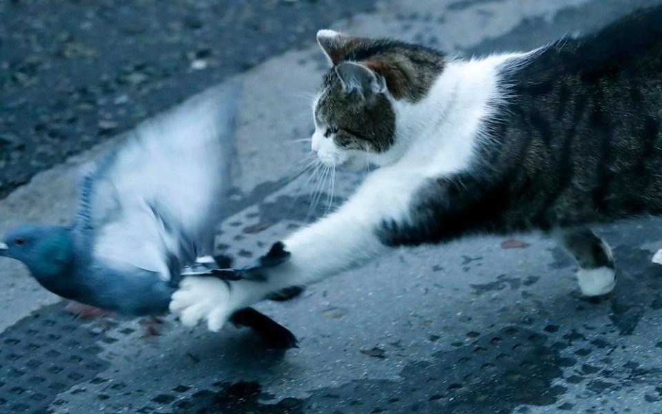 Larry el gato es un personaje muy querido por los británicos