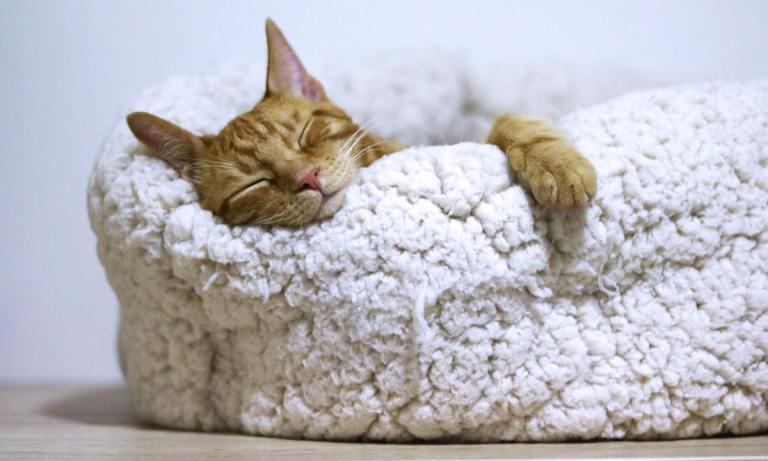 Las camas para gatos de Amazon son increíblemente cómodas y resistentes