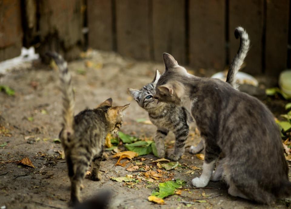 Las casetas para gatos callejeros deben de estar aisladas del suelo