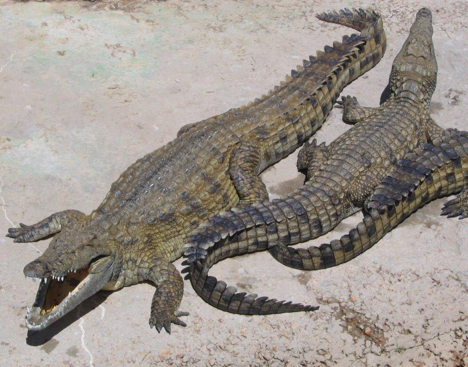 Los cocodrilos fueron venerados en el antiguo Egipto