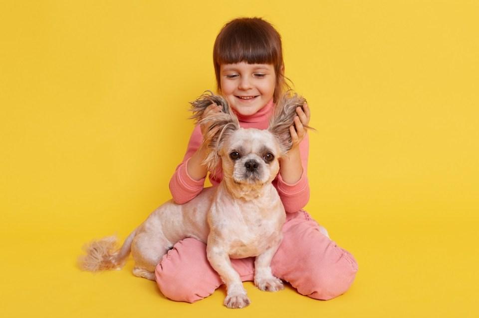 síntomas costras orejas perro