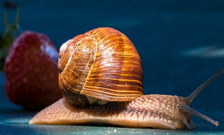 ¿Sabes qué comen los caracoles para sobrevivir?