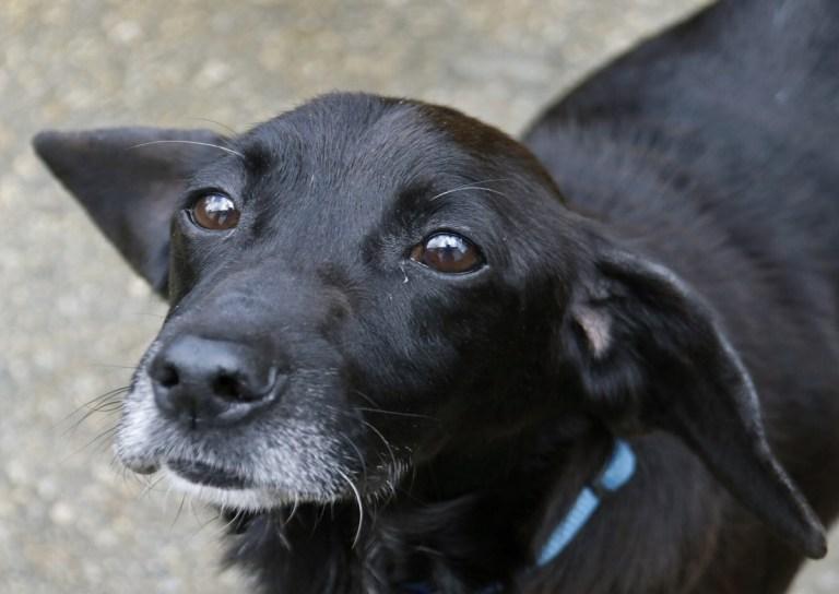 APADAN es una de las asociaciones en las que puedes adoptar un perro en Galicia