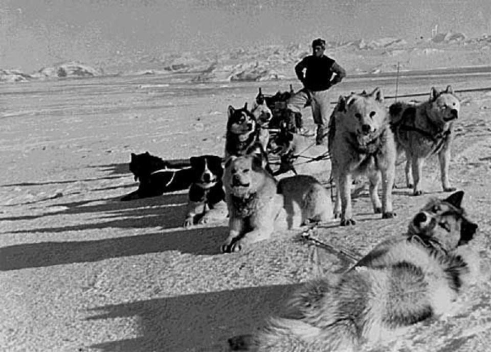 El perro polar argentino es una de las razas de perros que se han extinguido por la acción directa del hombre