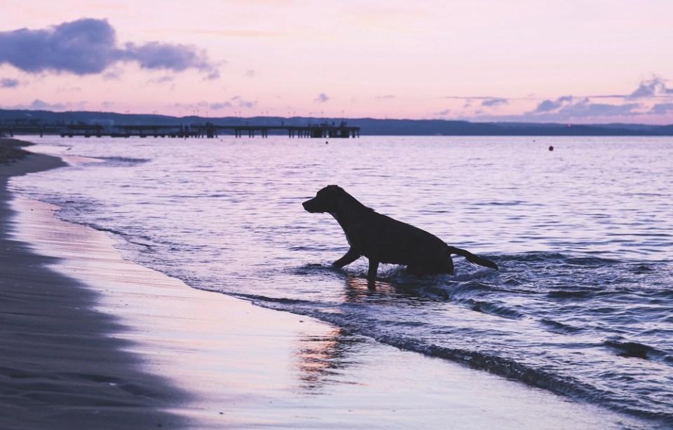 hoteles que admiten mascotas en la playa en España