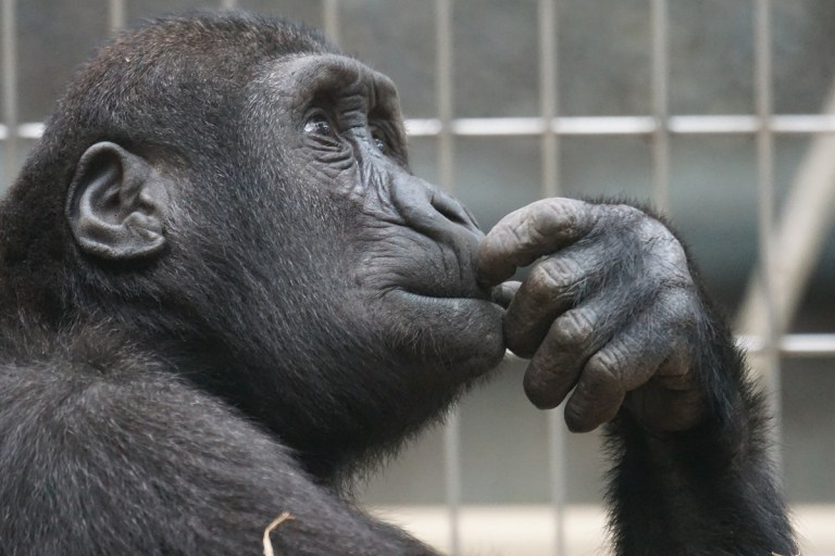 animales más inteligentes del mundo