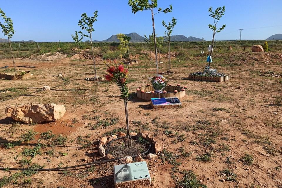 Elisia es un cementerio de mascotas donde puedes plantar un árbol a partir del cuerpo de tu mascota