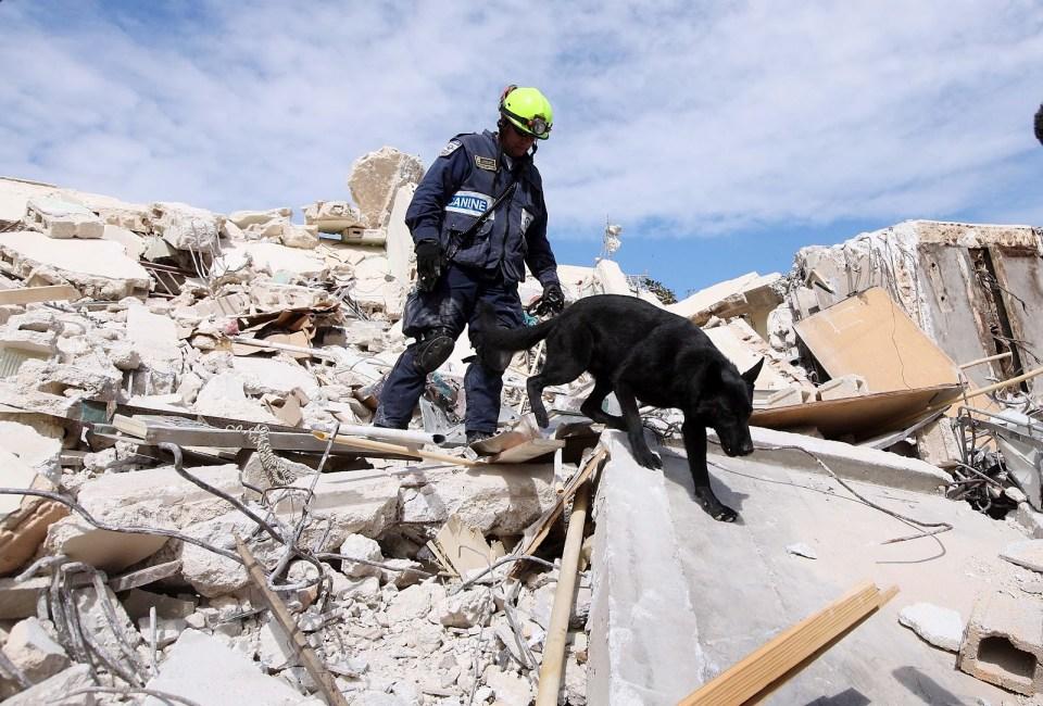 mejores razas de perros de rescate