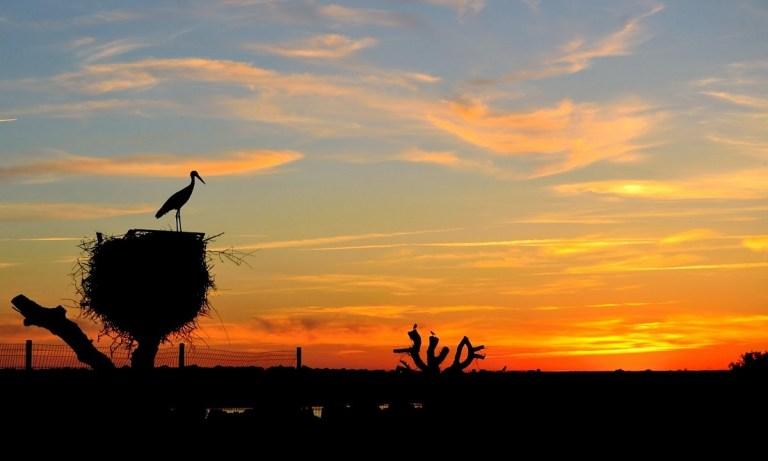 parques para ver animales en semilibertad en España