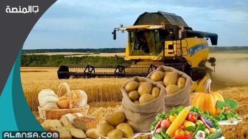 أهم المحاصيل الزراعية في المملكة