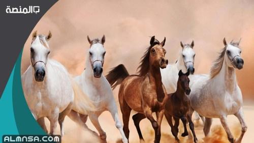 اسماء خيول عربية اصيلة 2021