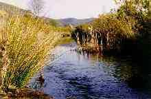 Rio Vascão ( Rui Santana )