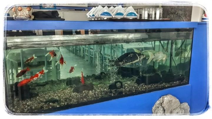 pești tropicali