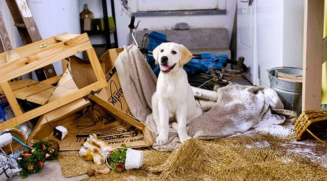 Dogs at home alone: 9 tips to prevent minor domestic disasters
