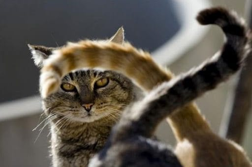 The Tail of the Cat and Its Movements: How to Decipher the Important Signals