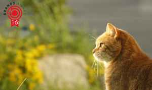 Été: comment nourrir son chat