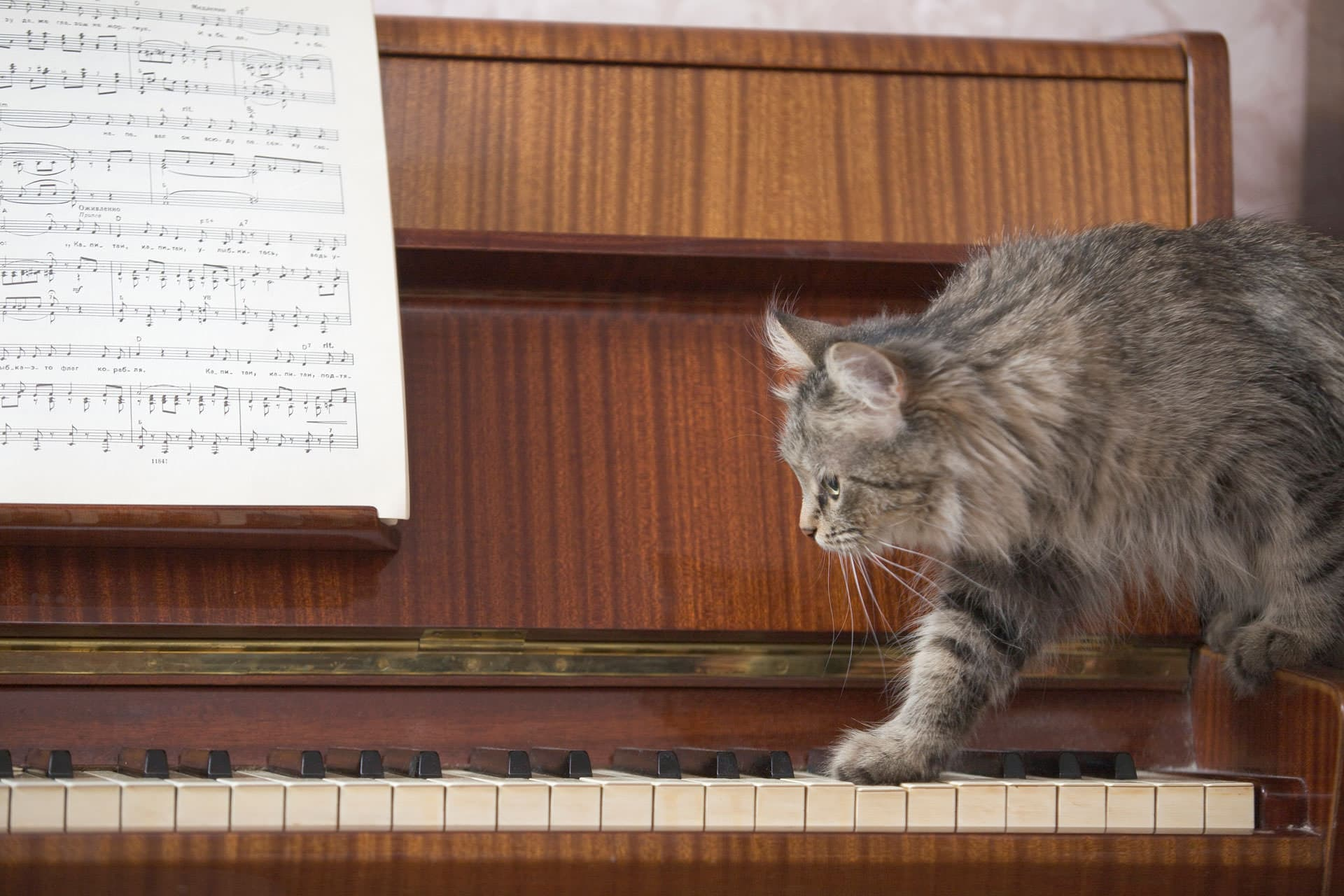 Cats and classical music: relax at the veterinary clinic