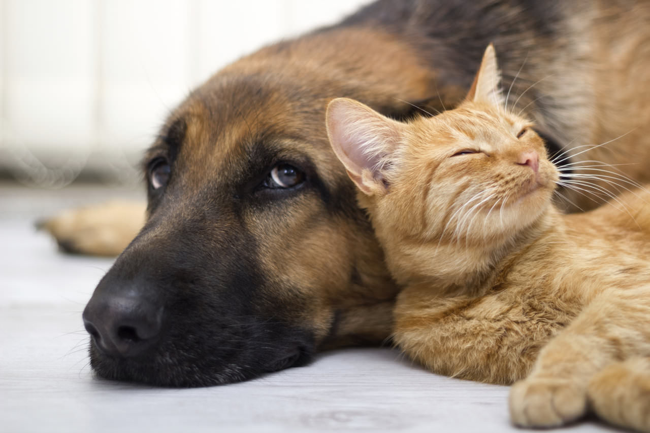 Dog or cat? It depends on your personality!