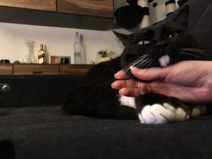 Customer story: The 'Legend' of Luna the cat