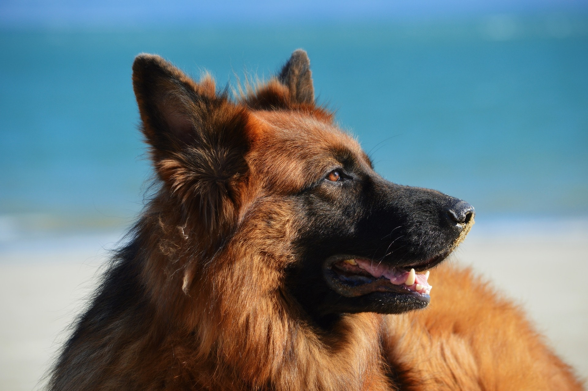 Taking your dog on holiday: the dos and don'ts