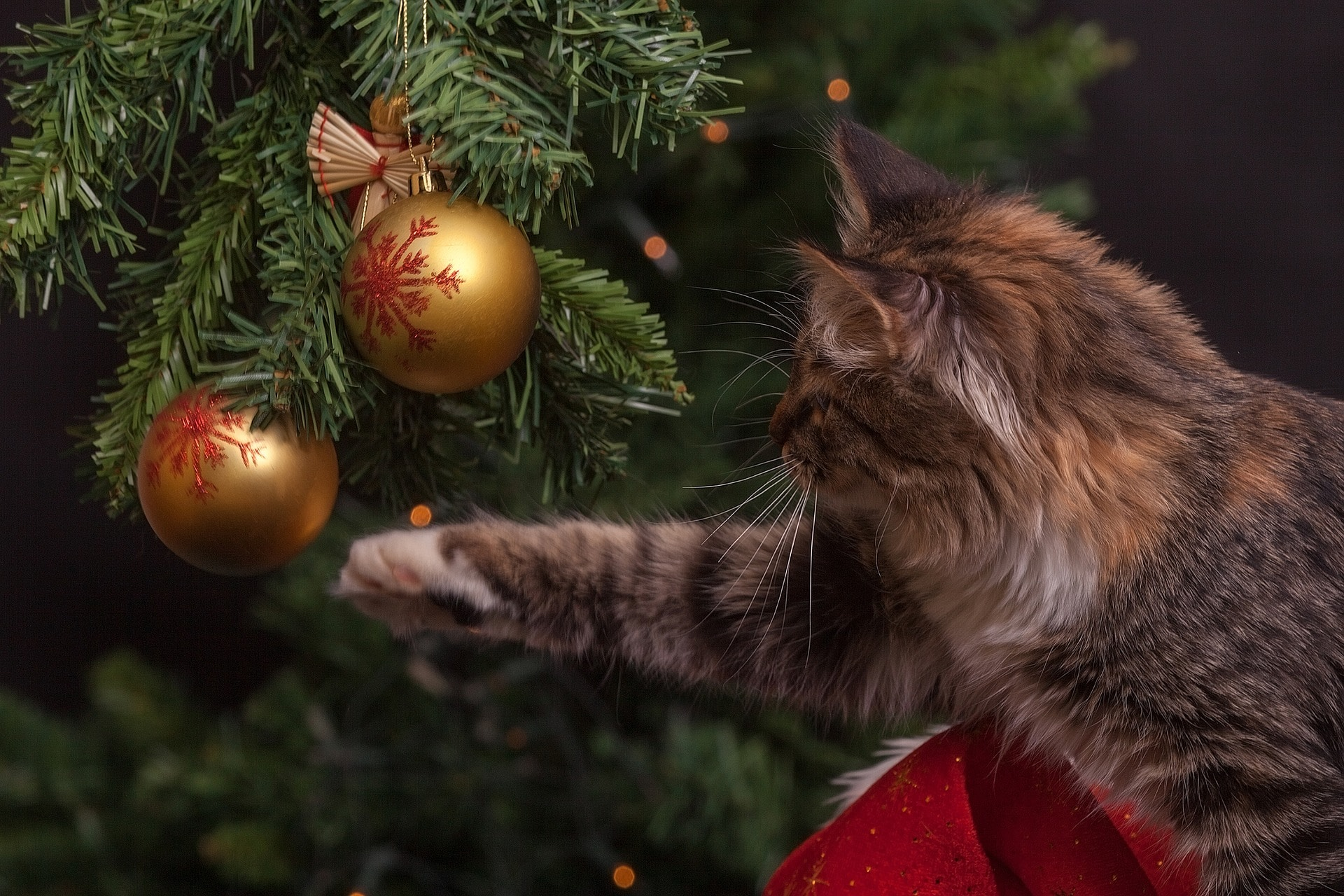 Keeping your animals safe during the festive season