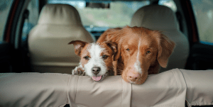 Three Things to Consider Before Taking Your Dog in the Car