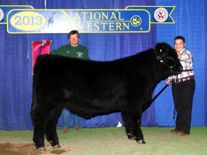 2013 Reserve Cross-Bred Prospect Steer Champion