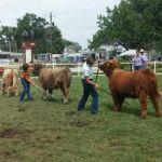2014 WY State fair