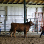 Isaiah Moore and Steer 3