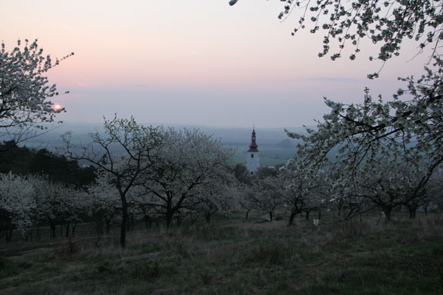 Rising sun over cherry orchard and church
