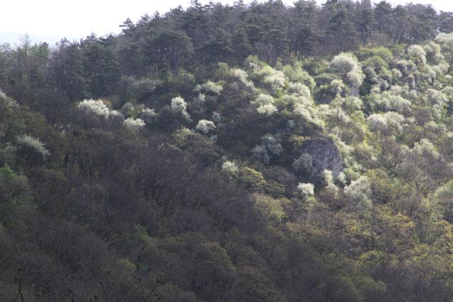 Flowering bushes up Molpir, Slovakia