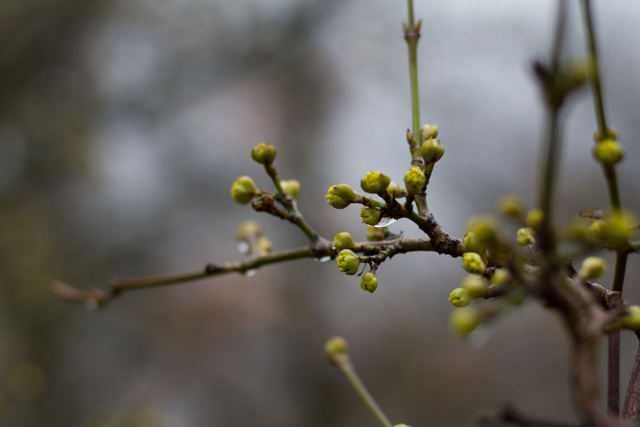 First flowering spring bushes in the Slovak Karpaty, Almost Bananas blog