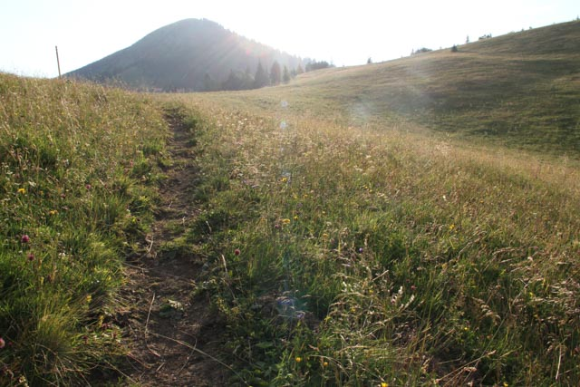 trail in meadow heading to Chata pod Borisovom