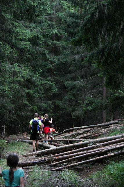 Crossing fallen trees