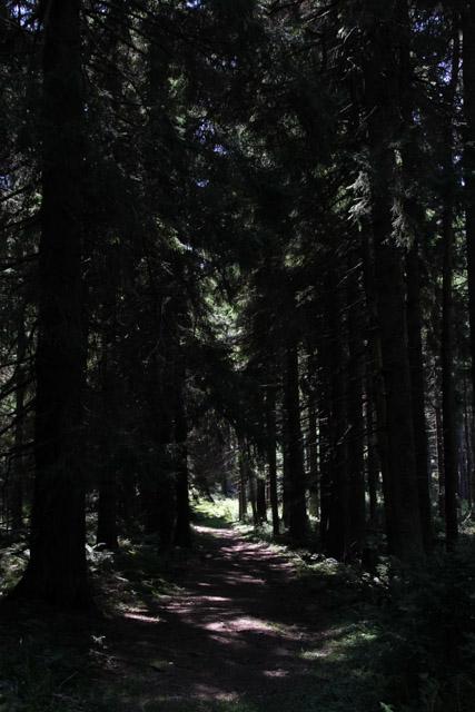 Forest below Veľký Choč