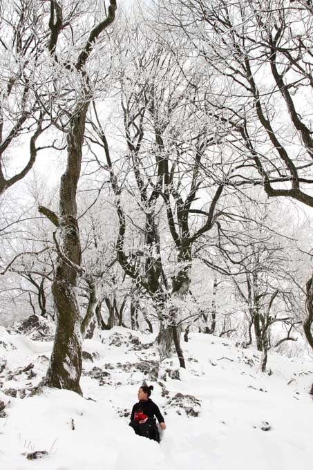 gnarled trees on cierna skala