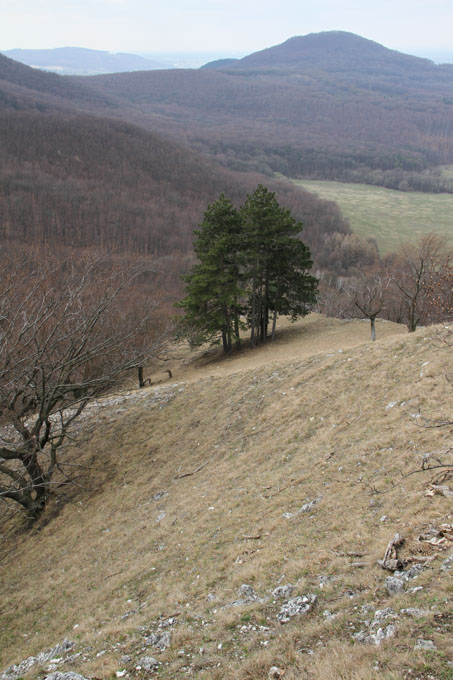 View from Jelenia hora