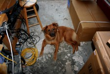 """In the old workshop (garage). My neighbor called her """"Sawdust""""."""