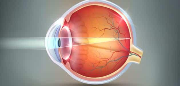 ما هي أجزاء العين