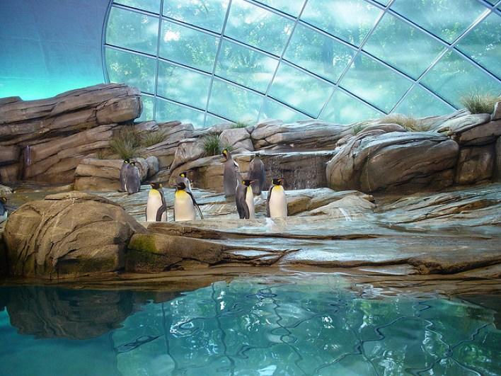 نتيجة بحث الصور عن حديقة حيوان برلين صور