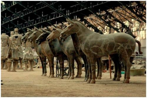 خيول جيش التيراكونا